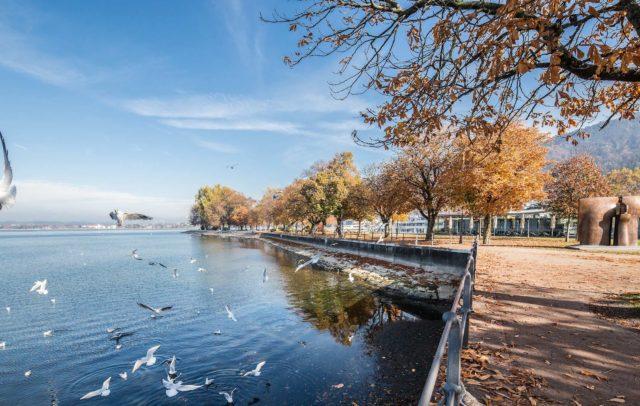 Herbst am Bodensee Ufer, Bregenz, Barrierefrei, Urlaub in Vorarlberg, Kontakt Urlaubsinformation (c) Petra Rainer, Bodensee-Vorarlberg Tourismus