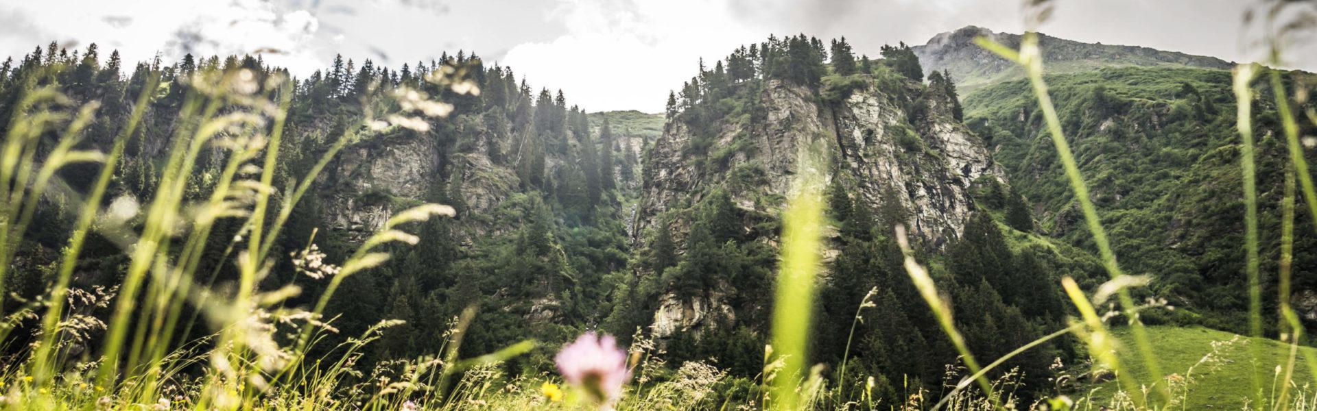 Auf dem Weg von der Mittelstation der Versettlabahn zur Alpe Garnera, Montafon © Dietmar Denger