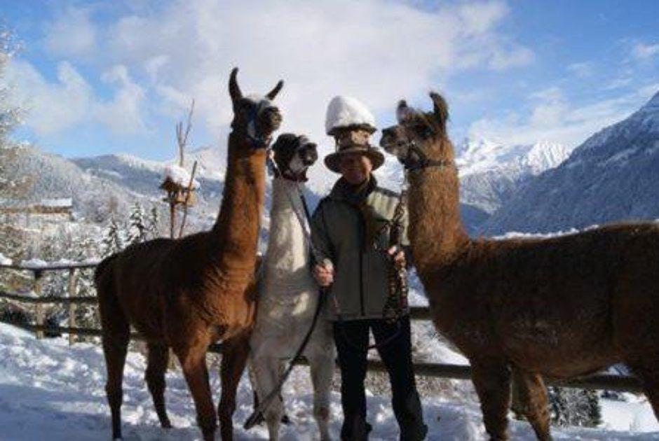 Lama Trekking im Montafon (c) Roland Fritsch / Montafon Tourismus