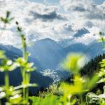 Alpe Ganera, Montafon (c) Dietmar Denger / Vorarlberg Tourismus