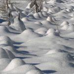 Verschneites Wäldchen