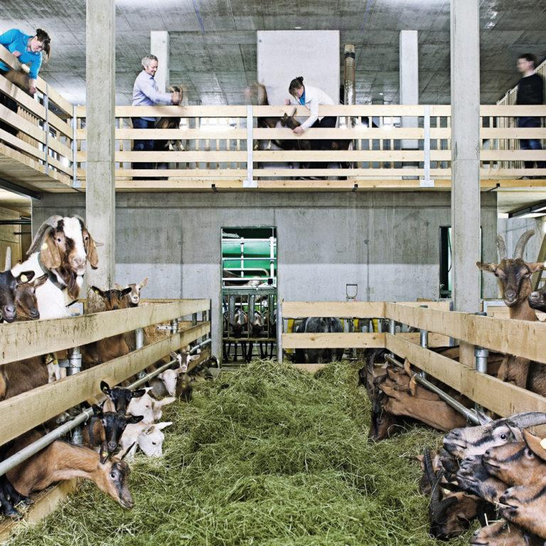 Bauernhof be-greifen, Ziegentollhaus, Metzler NATURHAUTNAH, Egg im Bregenzerwald © Markus Gmeiner/naturhautnah.at