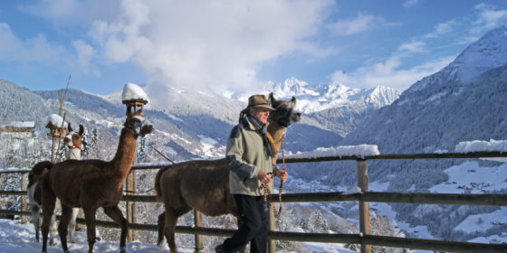 Lamatrekking Winter mit Lamero Horst Kuster (c) Montafon Tourismus GmbH
