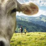 Bärgunthochalpe Kleinwalsertal, Vorarlberg Magazin Augenweide (c) Dietmar Denger-Vorarlberg Tourismus