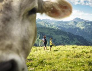 Bärgunthochalpe Kleinwalsertal (c) Dietmar Denger-Vorarlberg Tourismus