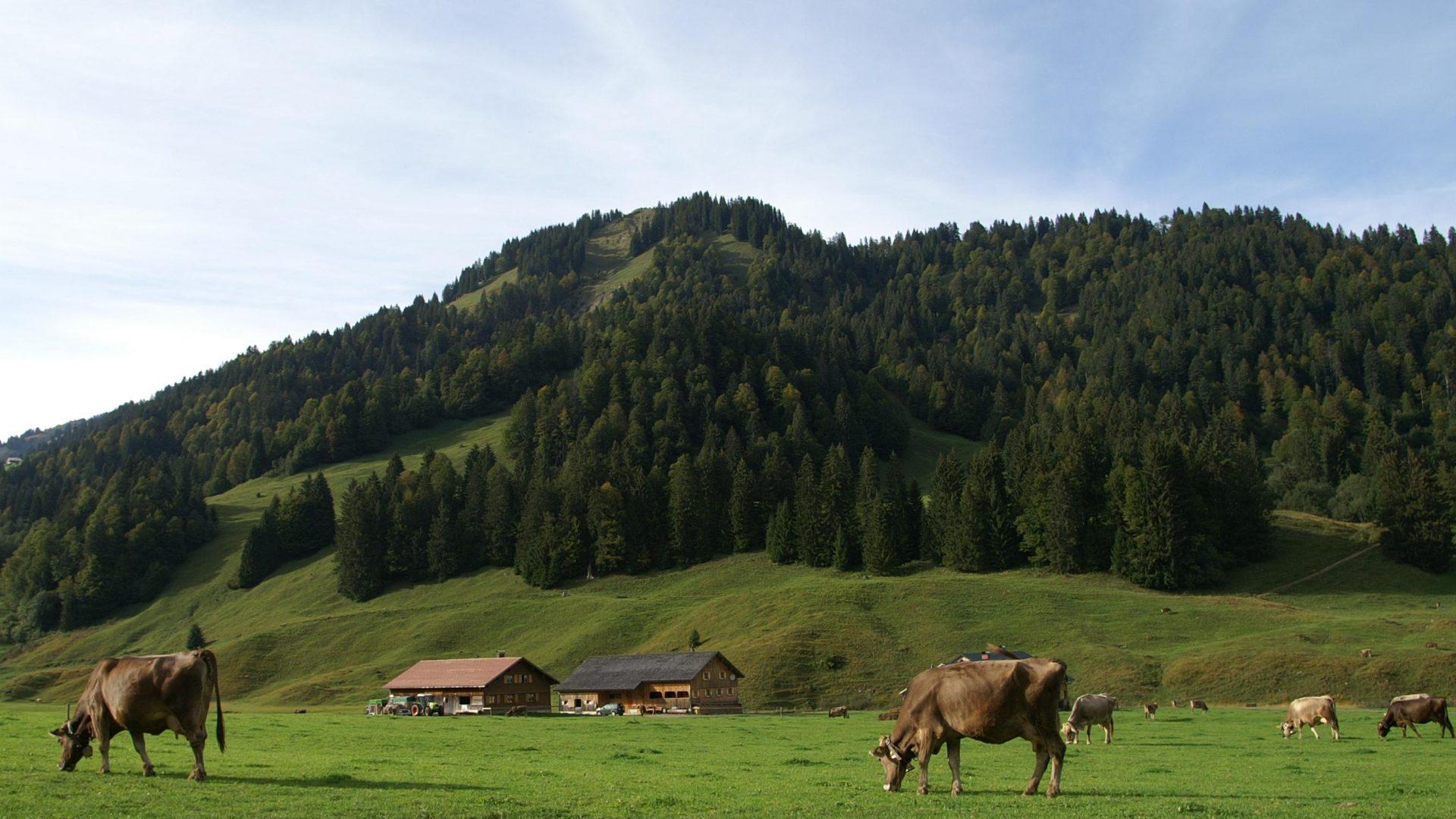 Blick auf die Sienspitze von Schönenbach