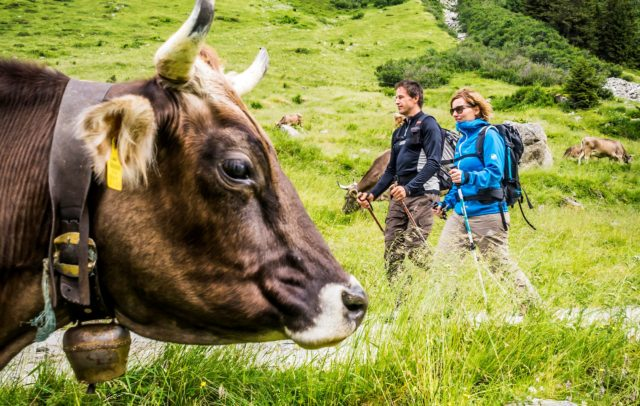 Wandern im Garnertatal, Alpe Garnera, Montafon (c) Dietmar Denger / Vorarlberg Tourismus