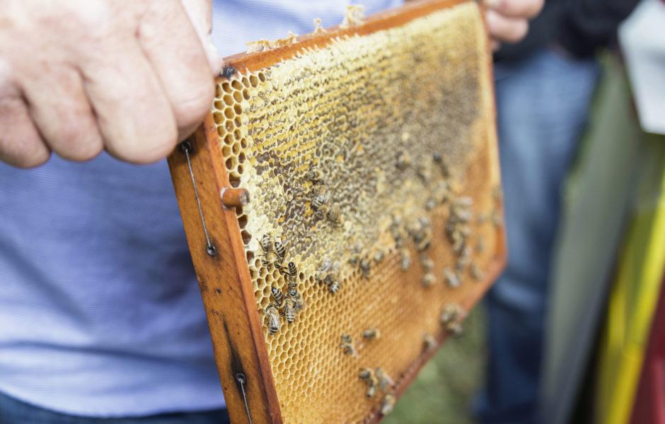 Bienenwanderung im Montafon © Martina Zudrell / Montafon Tourismus GmbH, Schruns
