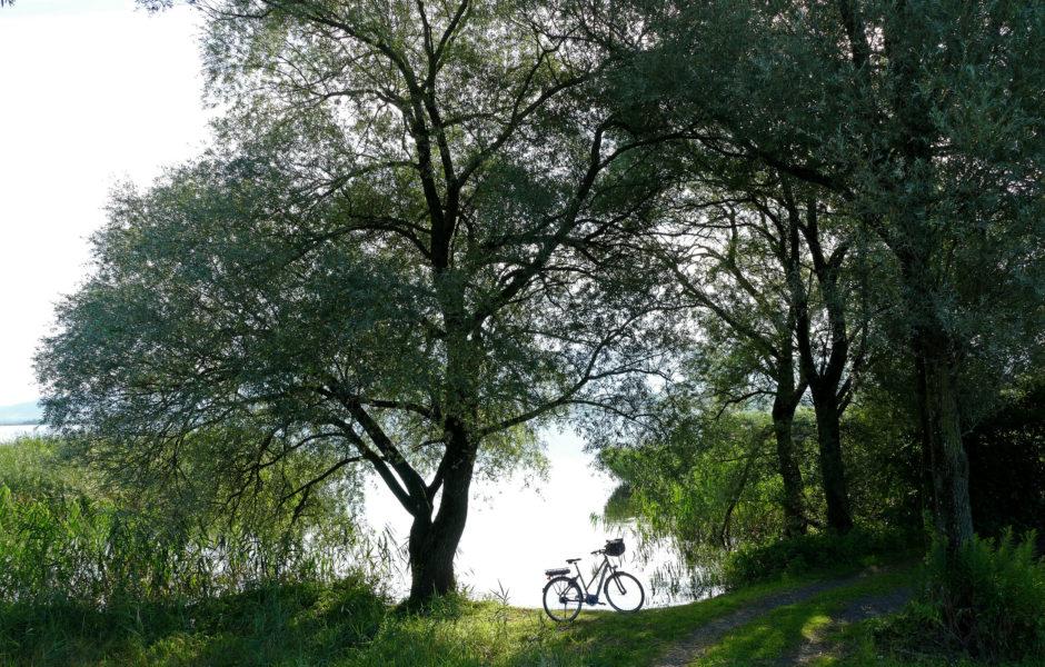 Fussacher Bucht, Radfahren, Rheindelta (c) Noachim Negwer / Vorarlberg Tourismus