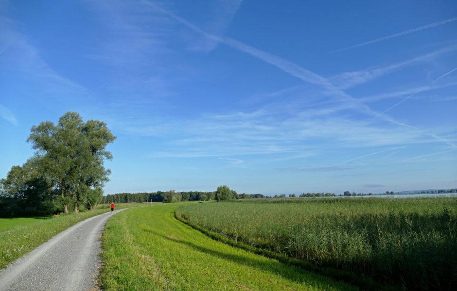 Radfahren im Gebiet Rheindelta (c) Joachim Negwer, Vorarlberg Tourismus
