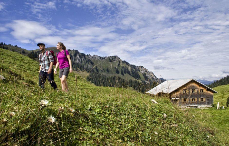 Kulinarisch Wandern im Bregenzerwald, Alpe Sattelegg, Urlaubsangebote © Adolf Bereuter / Bregenzerwald Tourismus