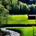 Löwenzahnfelder entlang des Grebenbaches
