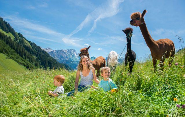 Top Family Familienhotel Alpenresort Walsertal, Wanderung mit Alpakas © Alpenresort Walsertal