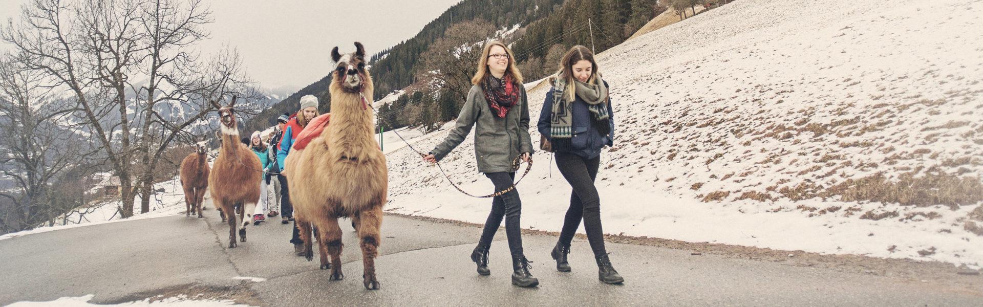 Lama Trekking, Bartholomäberg/Silbertal © Markus Gmeiner / Vorarlberg Tourismus GmbH