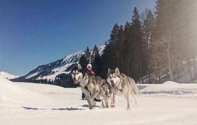 Husky Camp in Au, Kleinwalsertal © Markus Gmeiner / Vorarlberg Tourismus GmbH