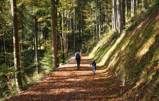 herbst-im-schnifner-buchenwald-schnifis-c-friedrich-boehringer.jpg