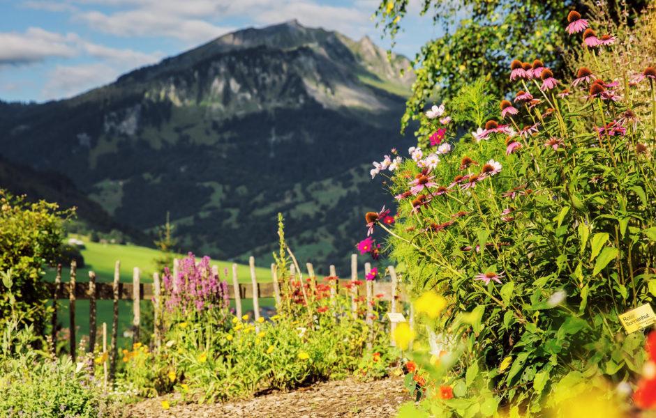 Holdamoos © Markus Gmeiner / Vorarlberg Tourismus GmbH