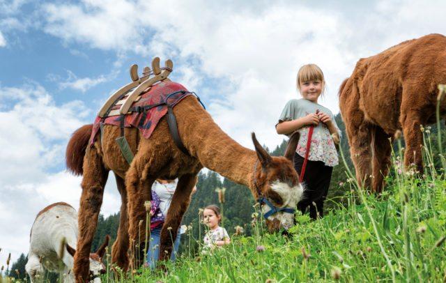 Lama-Trekking Montafon (c) Andreas Haller-Montafon Tourismus GmbH