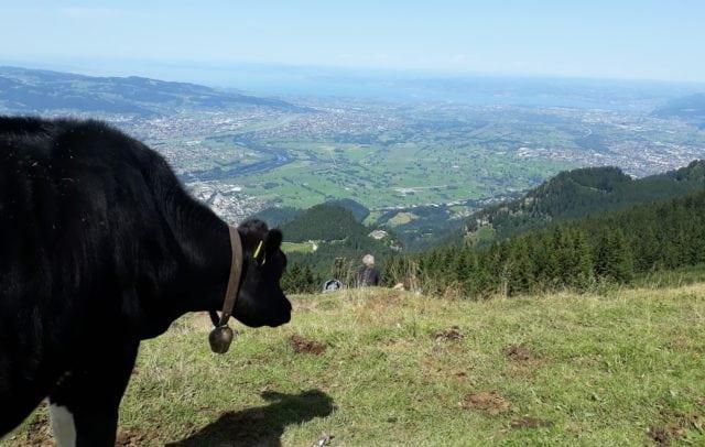 Blick zum Bodensee (c) Miriam Berkmann Vorarlberg Tourismus