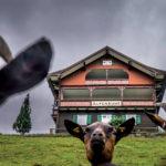 Ziegen Kleinwalsertal © Dietmar Denger / Vorarlberg Tourismus