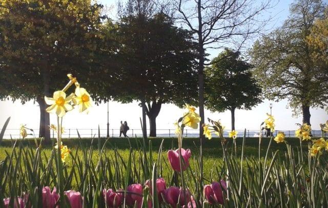Blumen, Frühling am Bregenzer Hafen, Bodensee, Vorarlberg (c) Verena Hetzenauer / Vorarlberg Tourismus