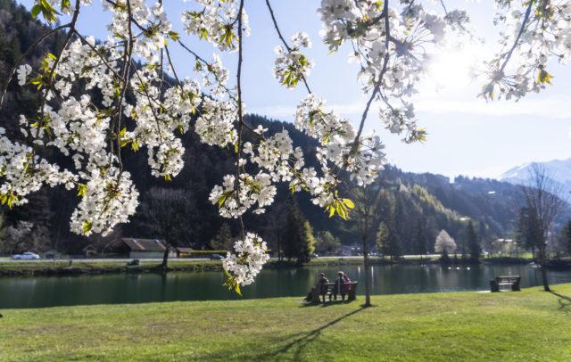 Baggersee Roter Stein Blüten © Agnes Ammann / Vorarlberg Tourismus