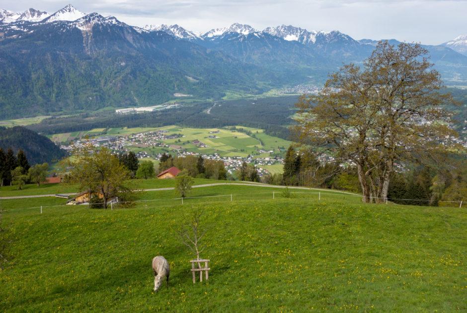 Ludescherberg - Wanderung auf dem Walserweg von Raggal nach Bludenz (c) Vorarlberg Tourismus