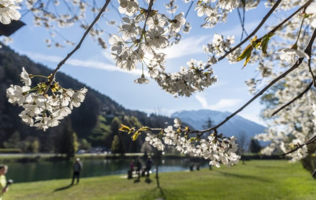 Montafon Illweg Fruehlingswanderung Baggersee Roter Stein Blueten 2 (c) Vorarlberg Tourismus-Agnes Ammann