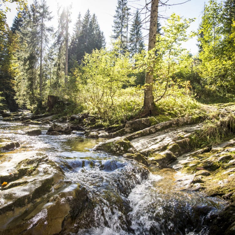 Schwarzwasserbach Wald Walser Omgang @Dominik Berchtold (13).jpg