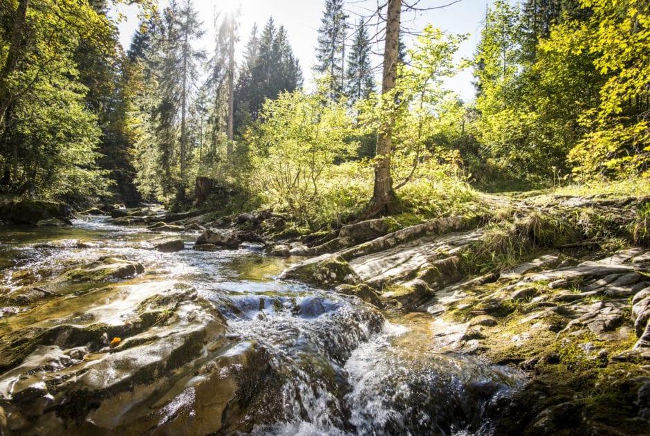 Schwarzwasserbach Wald Walser Omgang (c) Dominik Berchtold / Kleinwalsertal Tourismus eGen