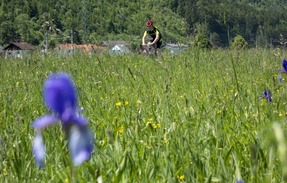 Irisblüte am Radweg