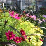 Sennhus Blumenladen