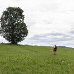 Richtung Scheffau (c) Martin Vogel / Vorarlberg Tourismus