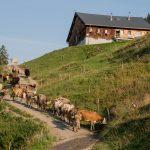 Alpe Untere Hinteregg