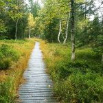 Bretterweg durchs Naturschutzgebiet Fohramoos