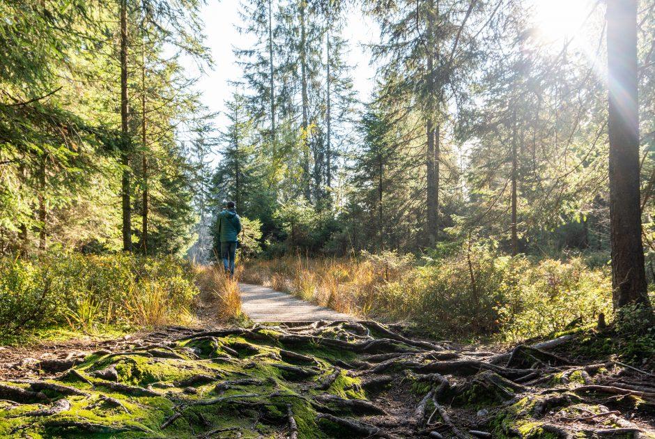 Herbststimmung Hochmoor Fohramoos (c) Agnes Ammann - Vorarlberg Tourismus