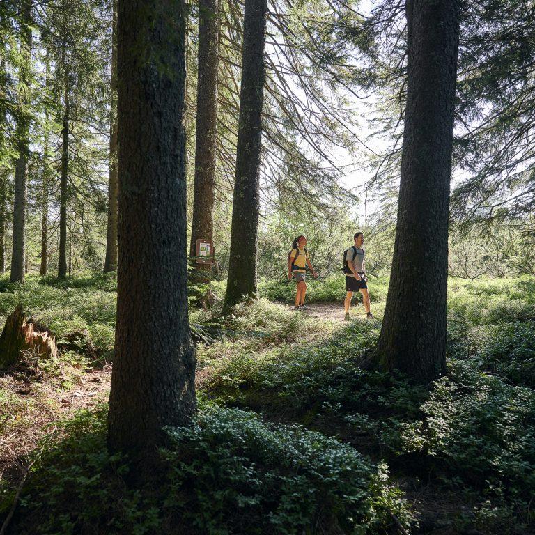 Wandern durch Bregenzerwälder Waldlandschaften (c) Alex Kaiser - Bregenzerwald Tourismus