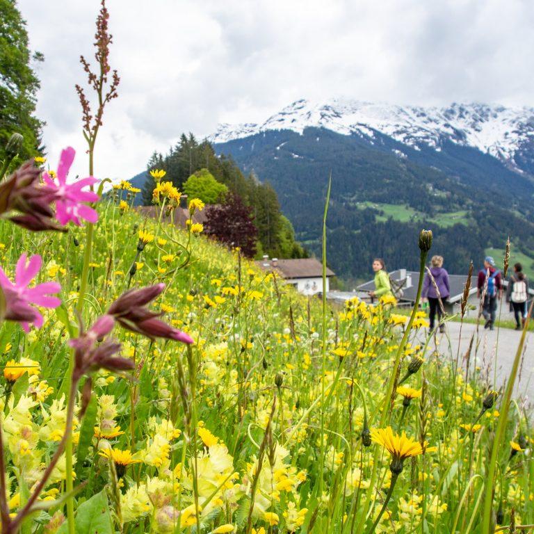 Blumenwiese Bartholomäberg © Agnes Ammann / Vorarlberg Tourismus
