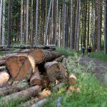 Hoher Sattel (c) Martin Vogel / Vorarlberg Tourismus