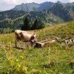 Alpe Wildgunten
