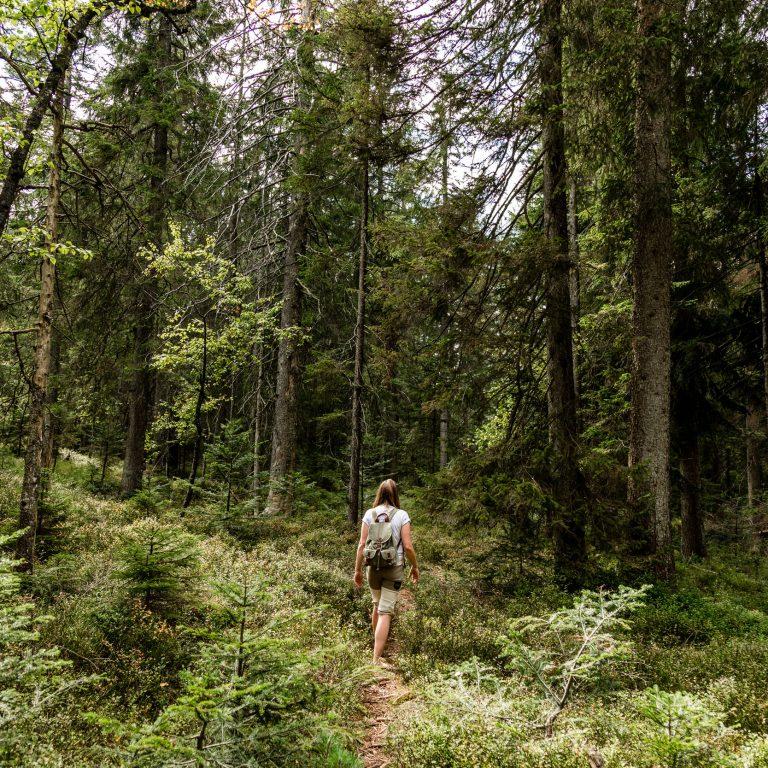 Walderfahrung Fohramoos © Anja Fontain / Vorarlberg Tourismus